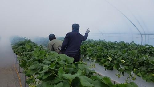 딸기농가 현장지도 및 방제교육.jpg